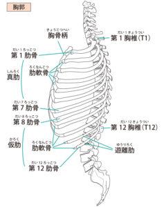 ひび 胸骨